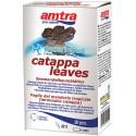 AMTRA - 30 Feuilles de Catappa